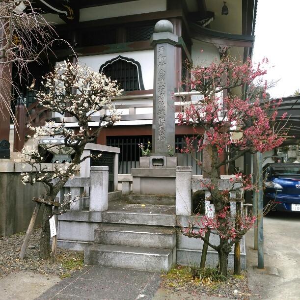 Prunus rose et prunus blanc à notre sanctuaire local Tabitabiya boutique japonaise