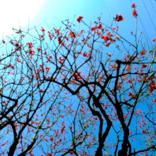 prunier en fleur Tokyo Tabitabiya boutique japonaise