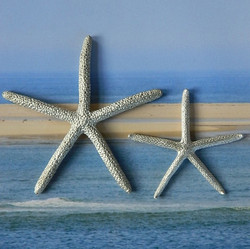 Large and Med Finger Starfish
