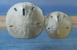 Large and Med Sand Dollar