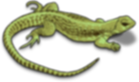 chameleon-clipart-lizard-2_edited.png