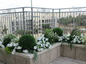 עיצוב גינה בירושלים