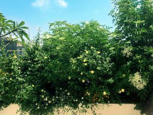 גינון מרפסת שמש בצפון תל אביב