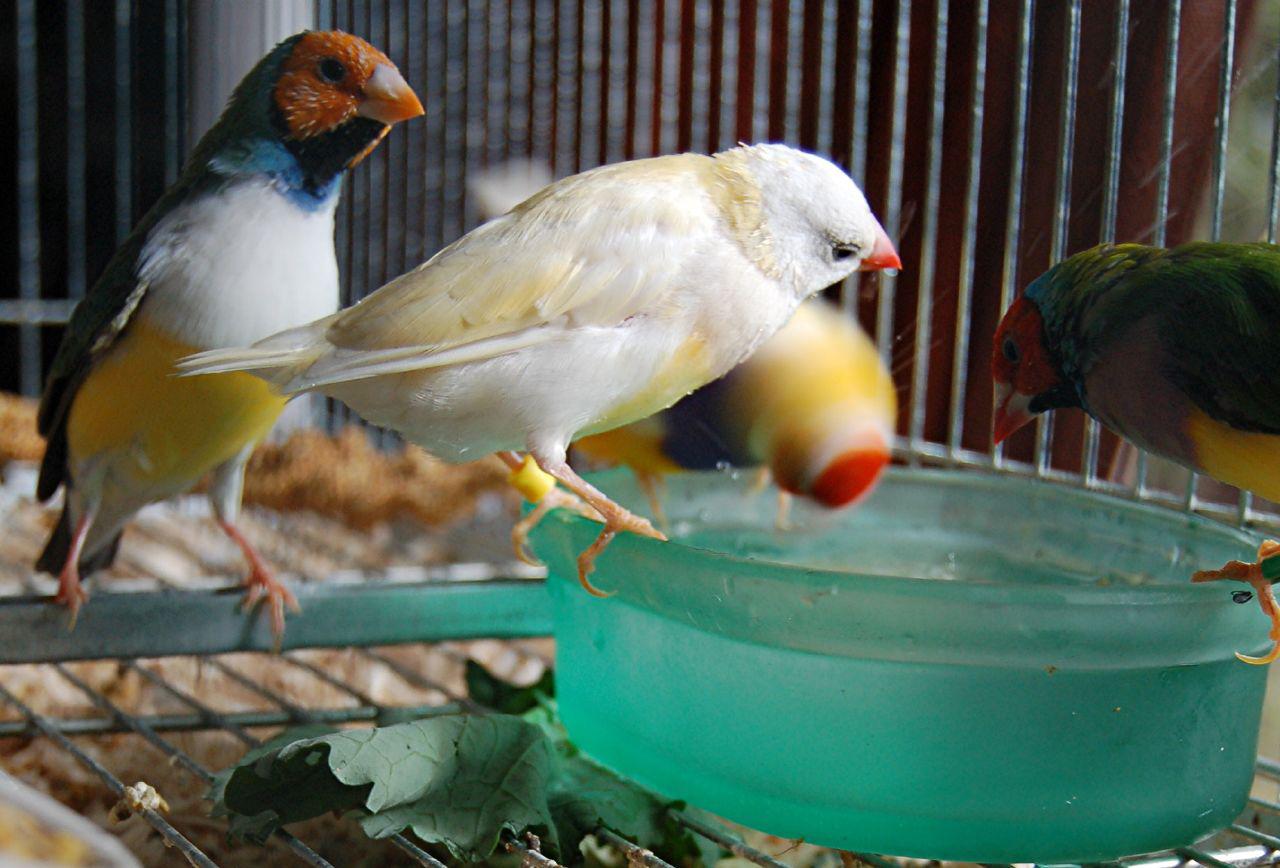 Sweet Family of Birds
