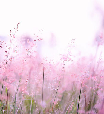 pink-flowers-photography-1128797_cropped