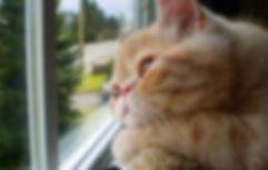 CatVideoFest2020-002.jpg