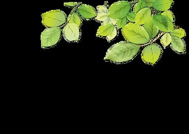 leaf1_edited_edited.png