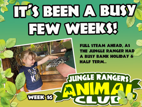 It's been a busy few weeks at The Jungle Hut!..
