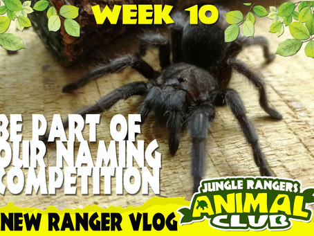 Week 10 Meet our new tarantula