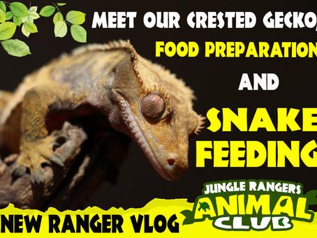 Meet Marley our Gecko + Snake Feeding.
