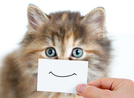 Souriez à la terre car actuellement nous la réparons!!!