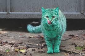 le chat vous explique aujourd'hui comment ont été découvert les méridiens