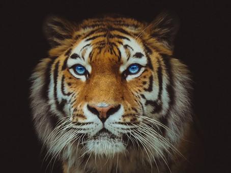 Ne présume jamais de tes forces. Il faut jauger du tigre pour être un grand ouvrier