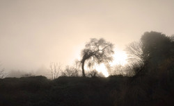 Misty trees - Reaching for the Sun