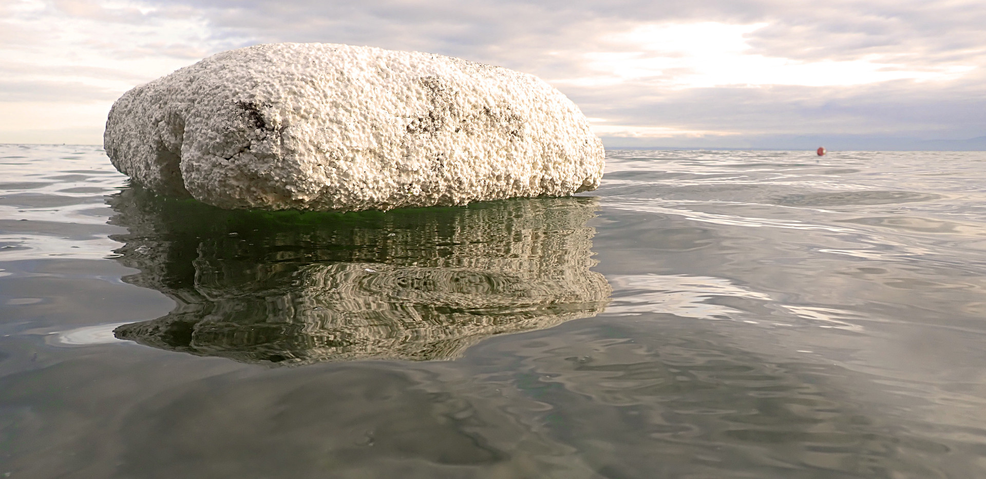 Polar Thaw