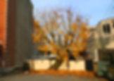 IMG_3888 horizontal tree.jpg