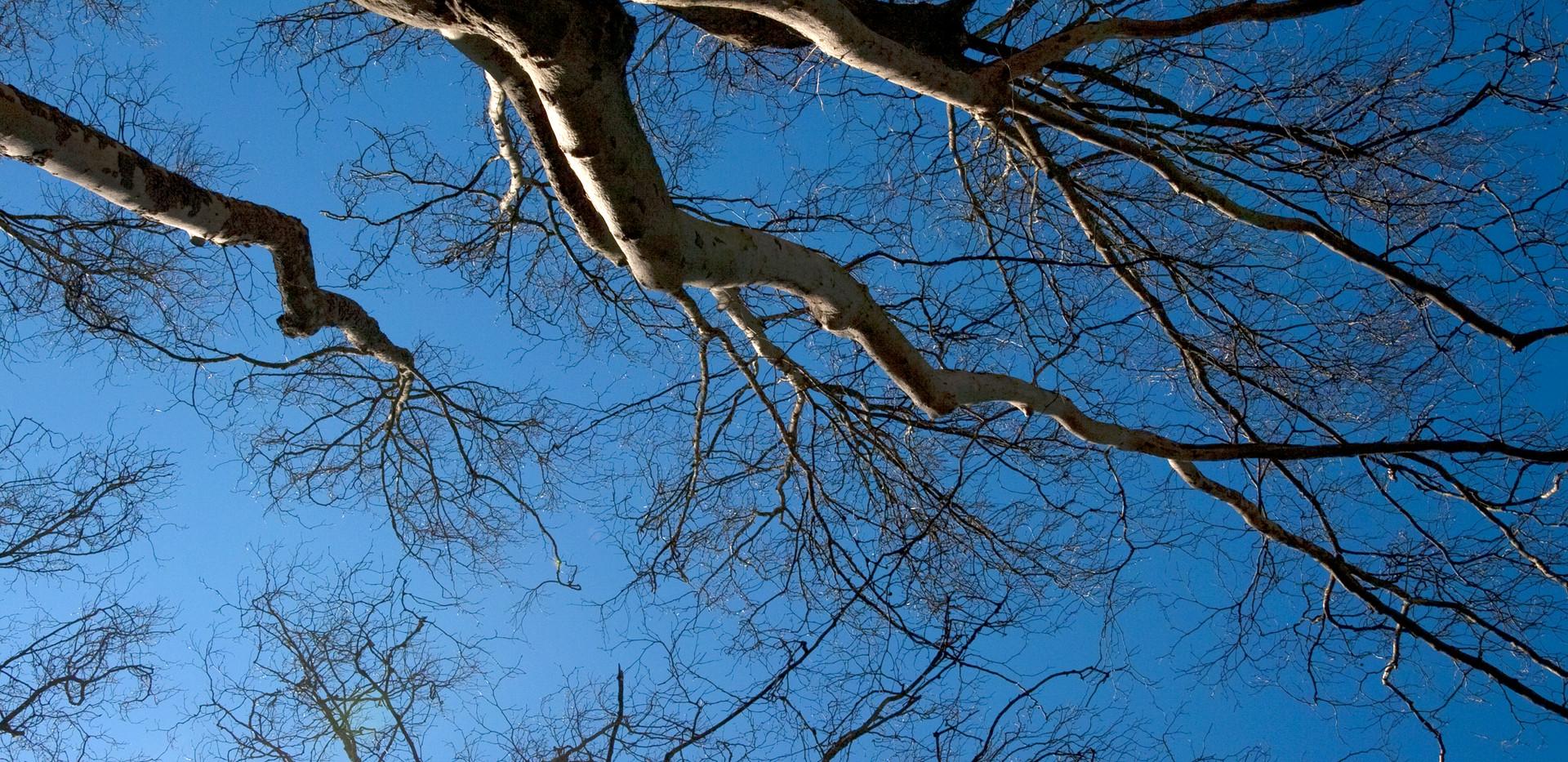 Canopy Caress IMG_9220