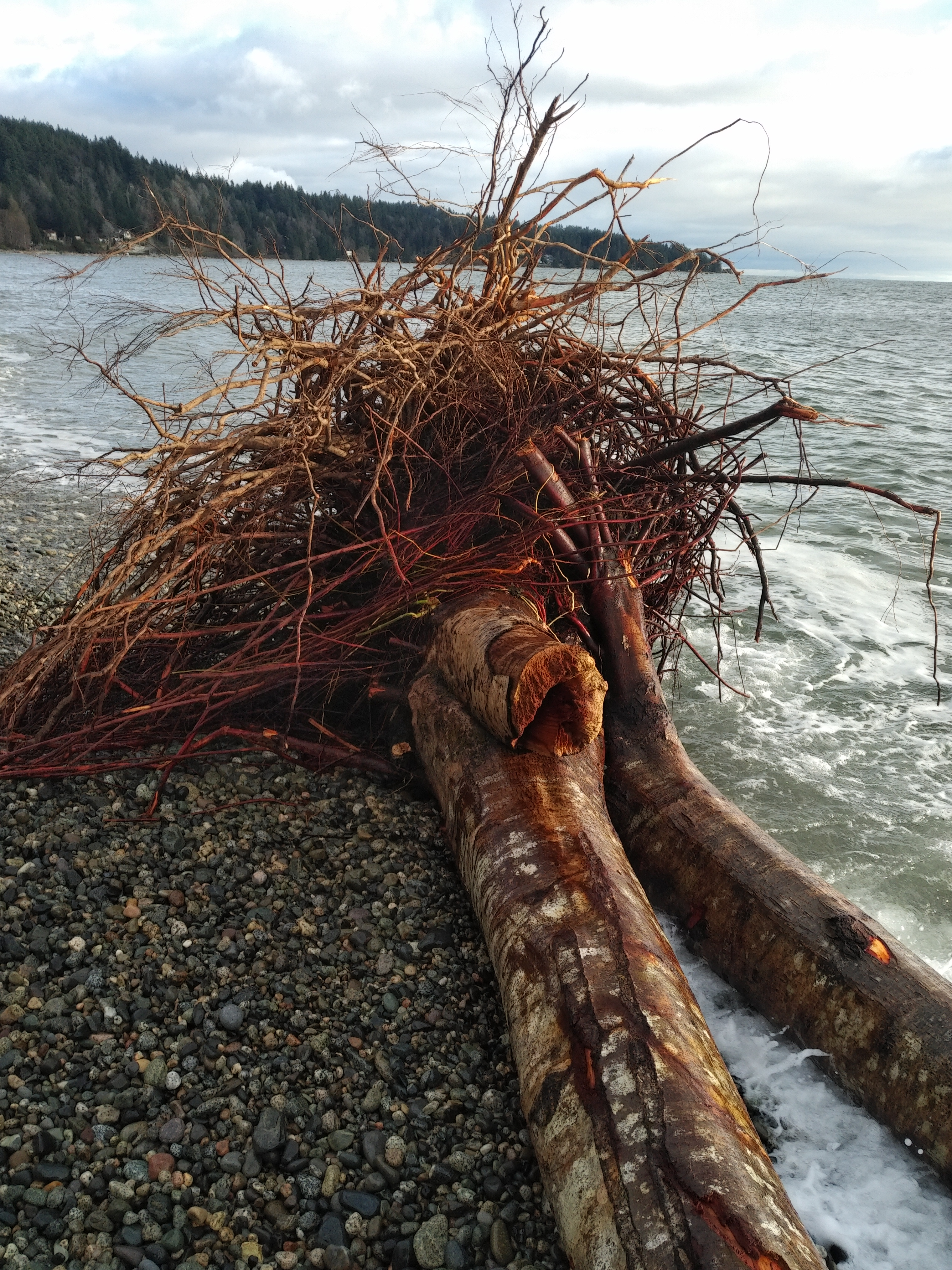 Rooted to land and sea