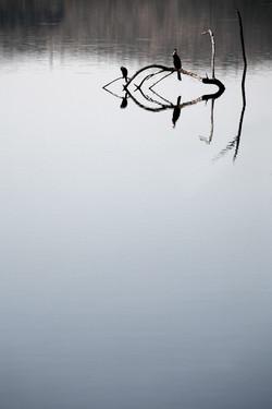 Reflective Birds