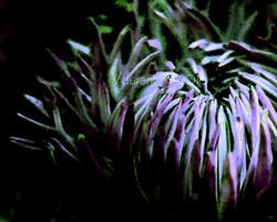 single pink & green flower 1 3854