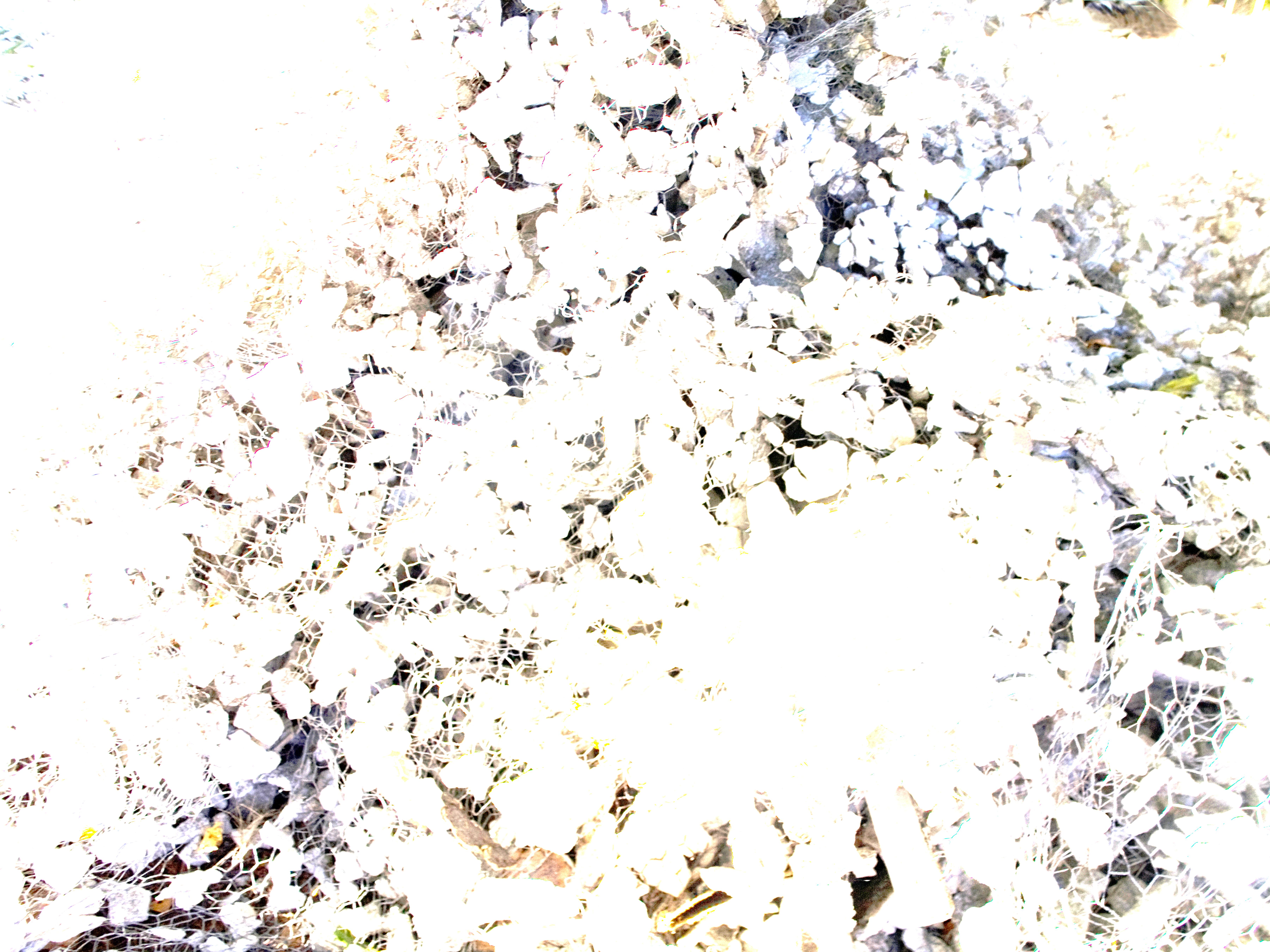 diversion bright background