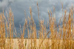 Vaal Grass 6652
