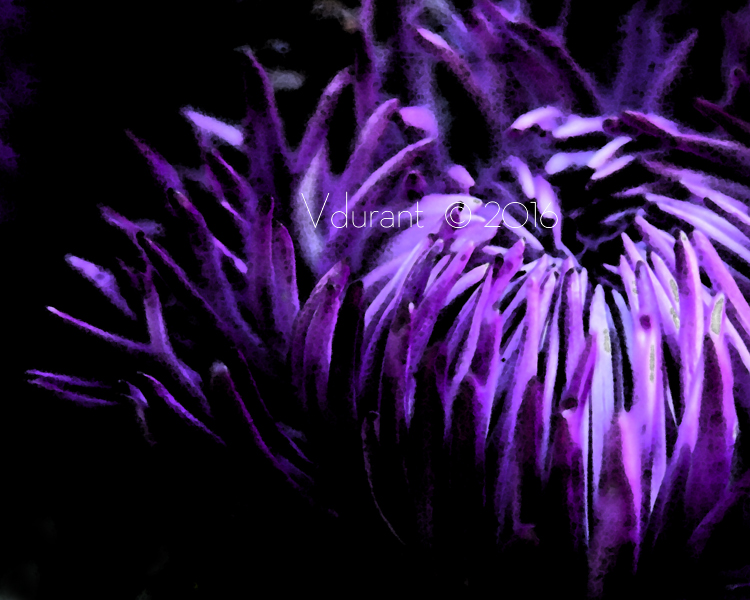 single purple flower 1- 3854