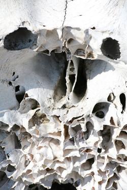 Diamond in the Rough - Skull