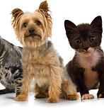mascotas|animales|animales domésticos