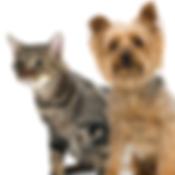 cat sitting san antonio metro pup sa dog walking