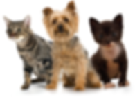 Animais de Estimação; cachorro, gato