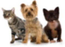 Animal Care Epoxy Flooring