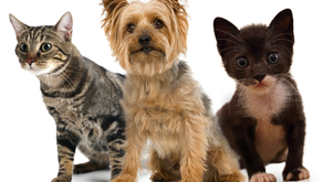 How to care for your pets using essential oils!