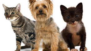 Тhе Most Common Dangers To Pets