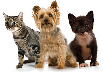 Dogs and cats are eager to see us. They love our gentle pet care and compassion.