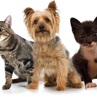 Notice Regarding Pet Visitation