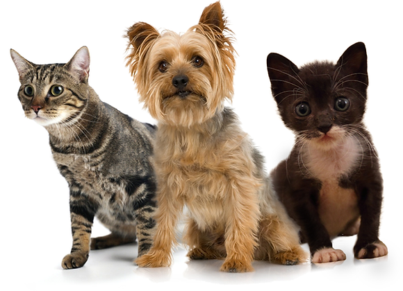 SPONSOR A MULTI-PET HOUSEHOLD FOR A MONTH