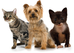Ah-CHOO! Ways to Reduce Pet Allergens