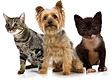 Junior Humane Society