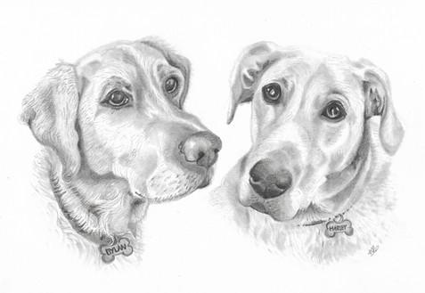 labrador graphite pet portrait