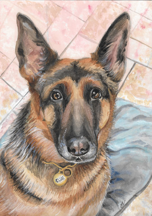 watercolour-german-shepherd-pet-portrait
