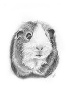 custom-pet-portrait-guinea-pig.jpg