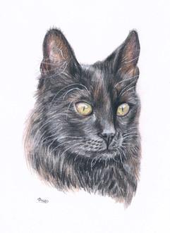 black-cat-cutom-pet-portrait.jpg