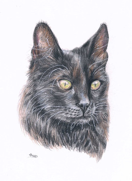 black-cat-cutom-pet-portrait.jpg