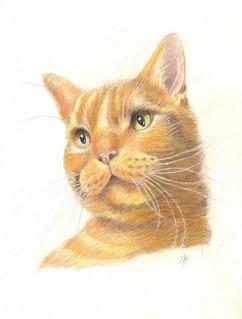 ginger_tabby_cat_colouredpencil.jpg