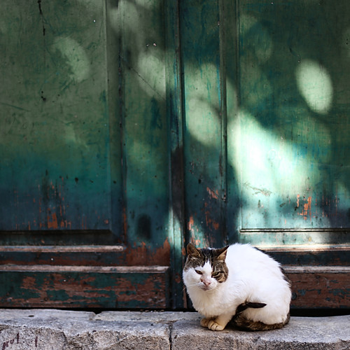 Cats of Dubrovnik