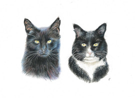 cat-custom-pet-portrait-colour-pencil.jp