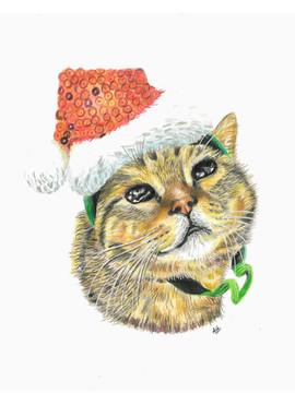 cute-cat-colour-pencil-portrait.jpg