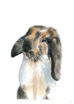 watercolour-pet-portrait-rabbit.jpg