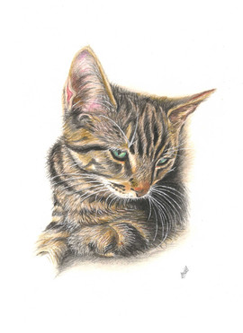 memorial-pet-portrait-cat.jpg